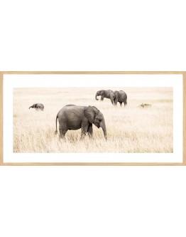 Elephants Framed Print 83x42cm