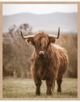 Highland Cow Framed Print 63x78cm