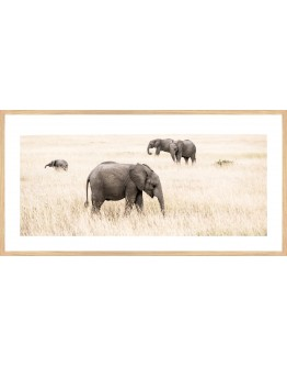 Elephants Framed Print 83x42cm