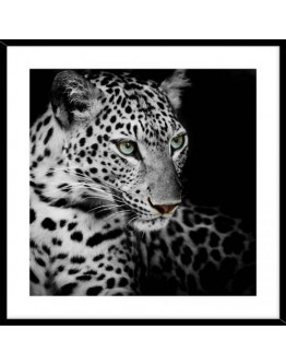Leopard 50x50cm