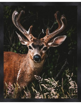 Deer Framed Print 65x80cm