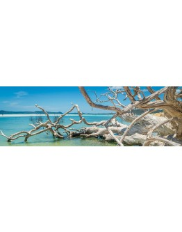 Driftwood at Whitehaven Printed Canvas 153x53cm