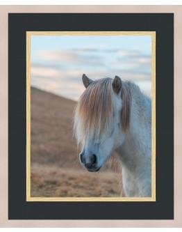 Horse Framed Print 108x88cm