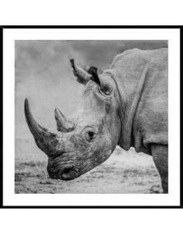 Rhino 50x50