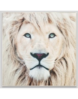 Lion Printed Framed Canvas 100x100cm